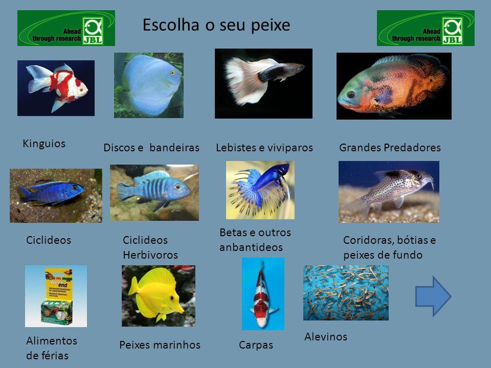 Escolha o seu peixe Kinguios Discos e bandeiras Lebistes e viviparos