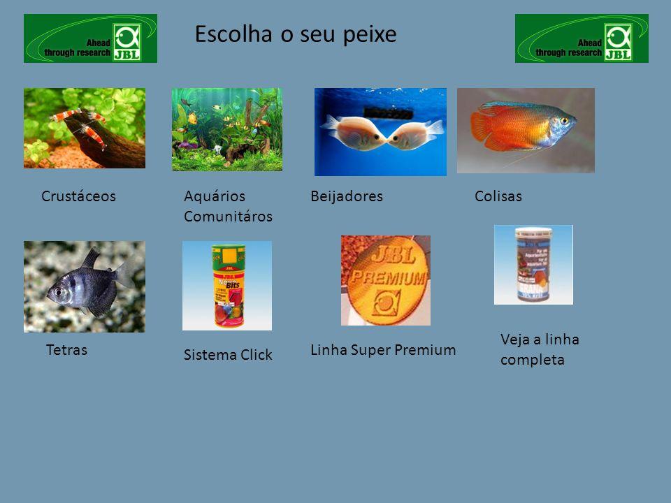 Escolha o seu peixe Crustáceos Aquários Comunitáros Beijadores Colisas