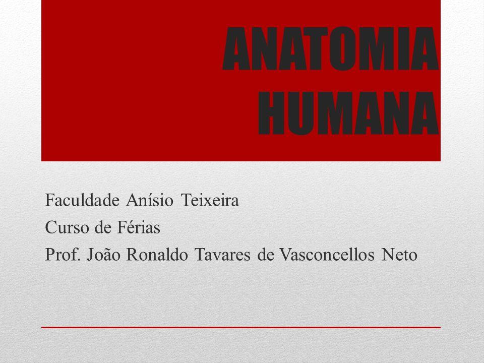 ANATOMIA HUMANA Faculdade Anísio Teixeira Curso de Férias