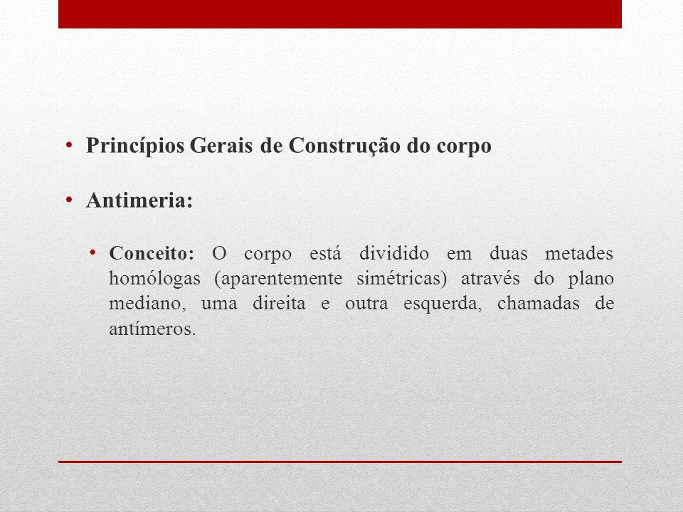 Princípios Gerais de Construção do corpo Antimeria:
