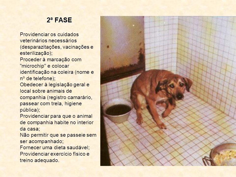 2ª FASE Providenciar os cuidados veterinários necessários (desparazitações, vacinações e esterilização);