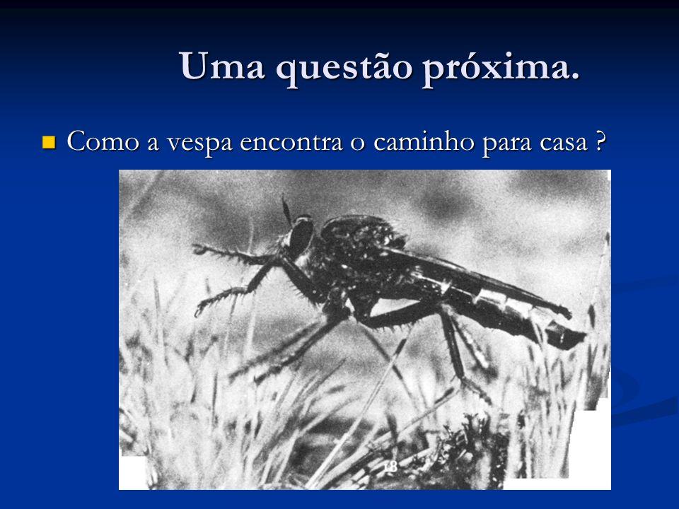Uma questão próxima. Como a vespa encontra o caminho para casa