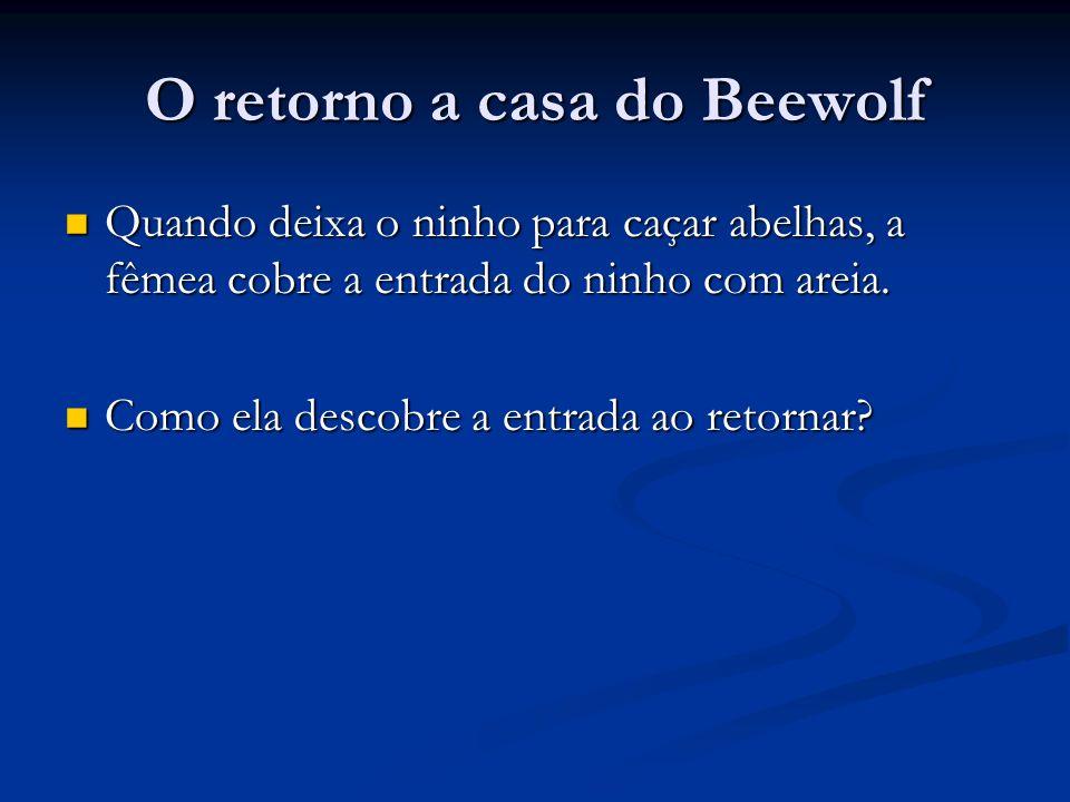 O retorno a casa do Beewolf