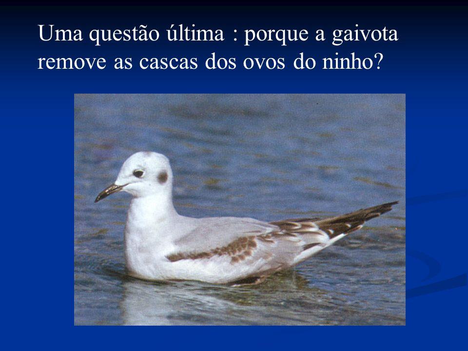 Uma questão última : porque a gaivota