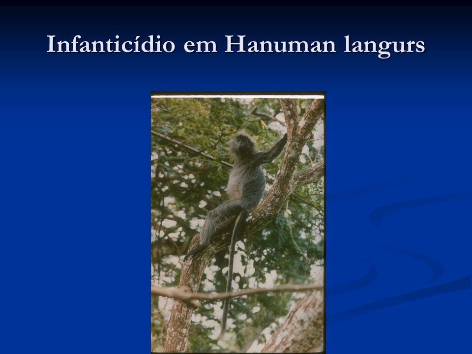 Infanticídio em Hanuman langurs