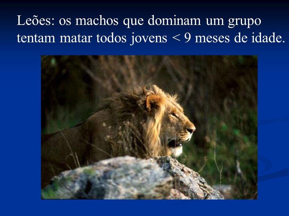Leões: os machos que dominam um grupo