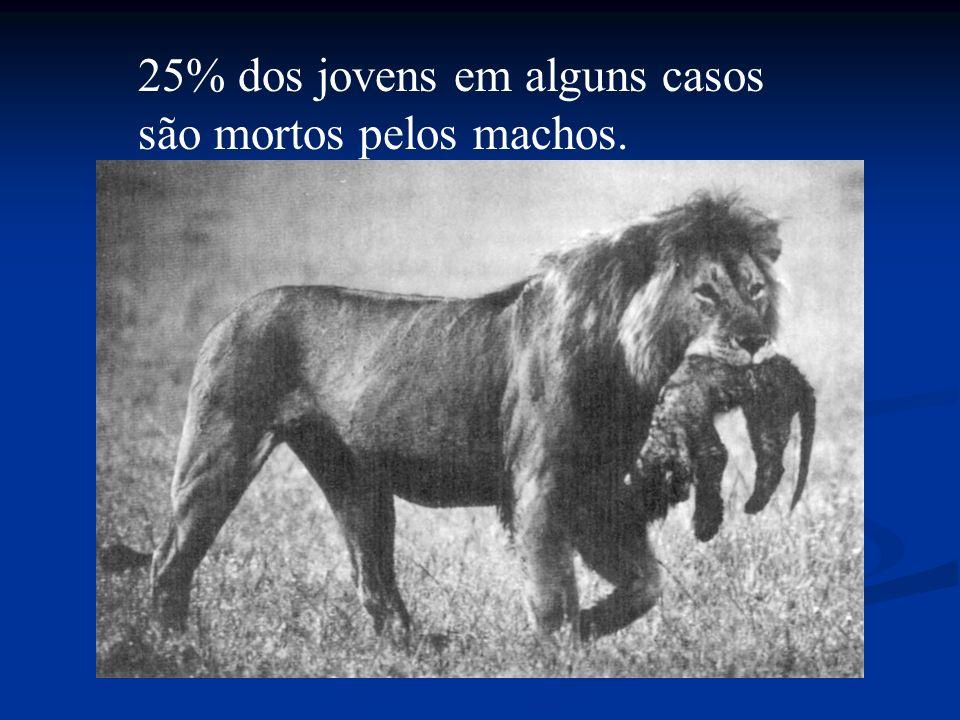 25% dos jovens em alguns casos são mortos pelos machos.