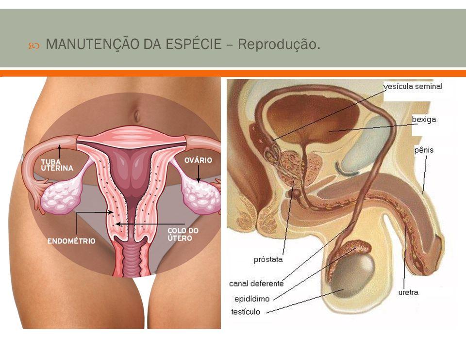 MANUTENÇÃO DA ESPÉCIE – Reprodução.