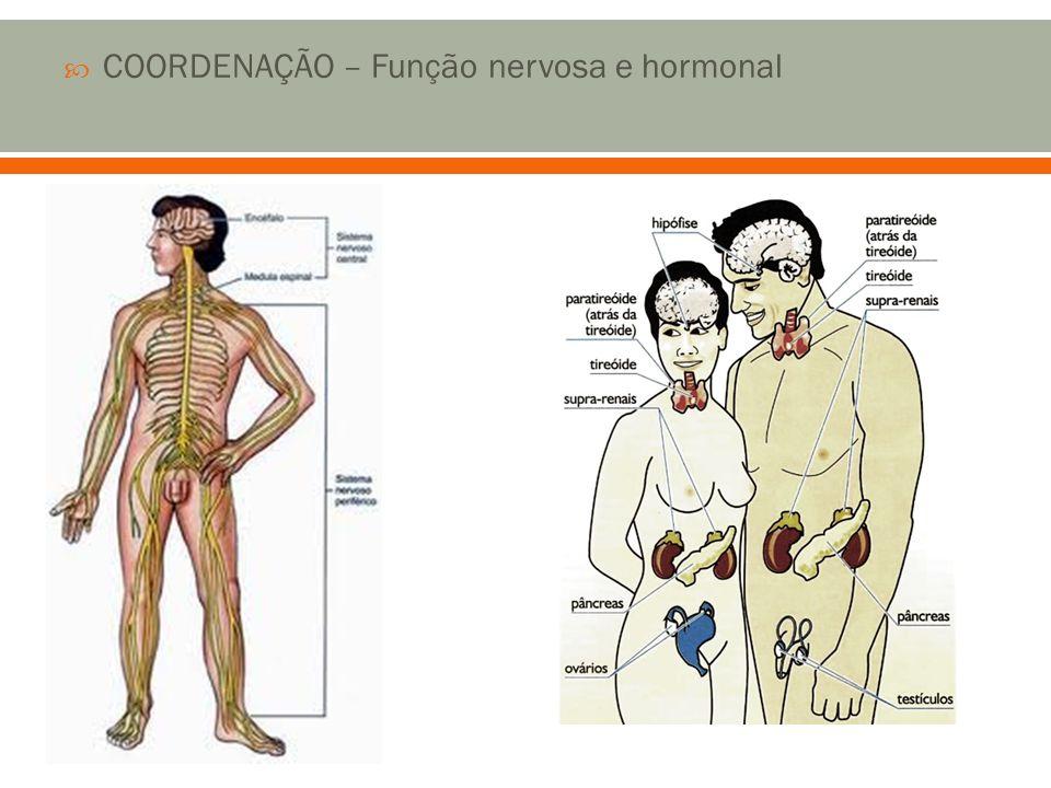 COORDENAÇÃO – Função nervosa e hormonal