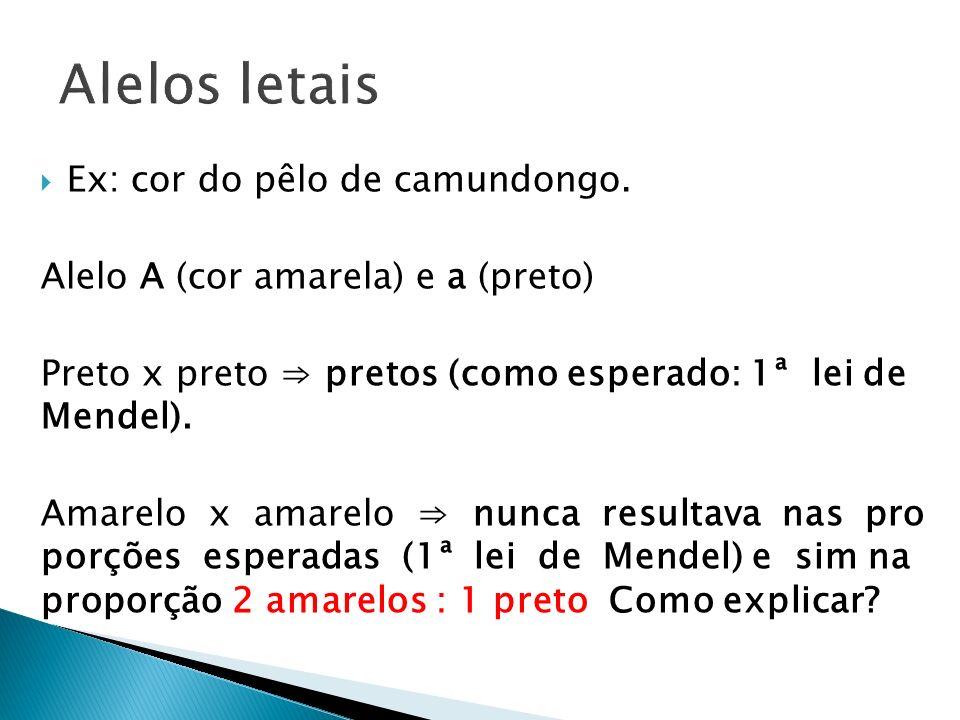 Alelos letais Ex: cor do pêlo de camundongo.