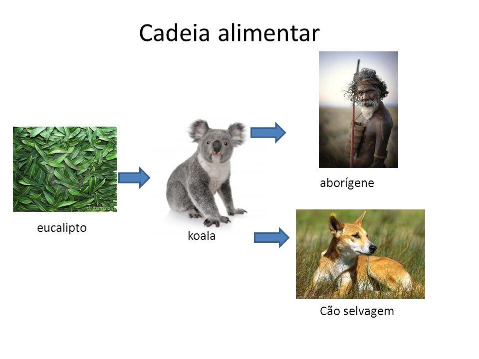 Cadeia alimentar aborígene eucalipto koala Cão selvagem