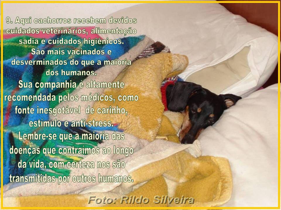 9. Aqui cachorros recebem devidos cuidados veterinários, alimentação