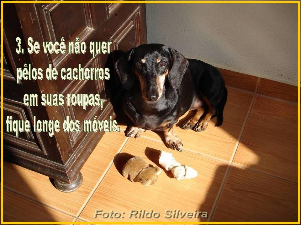 Foto: Rildo Silveira 3. Se você não quer pêlos de cachorros em suas roupas, fique longe dos móveis.