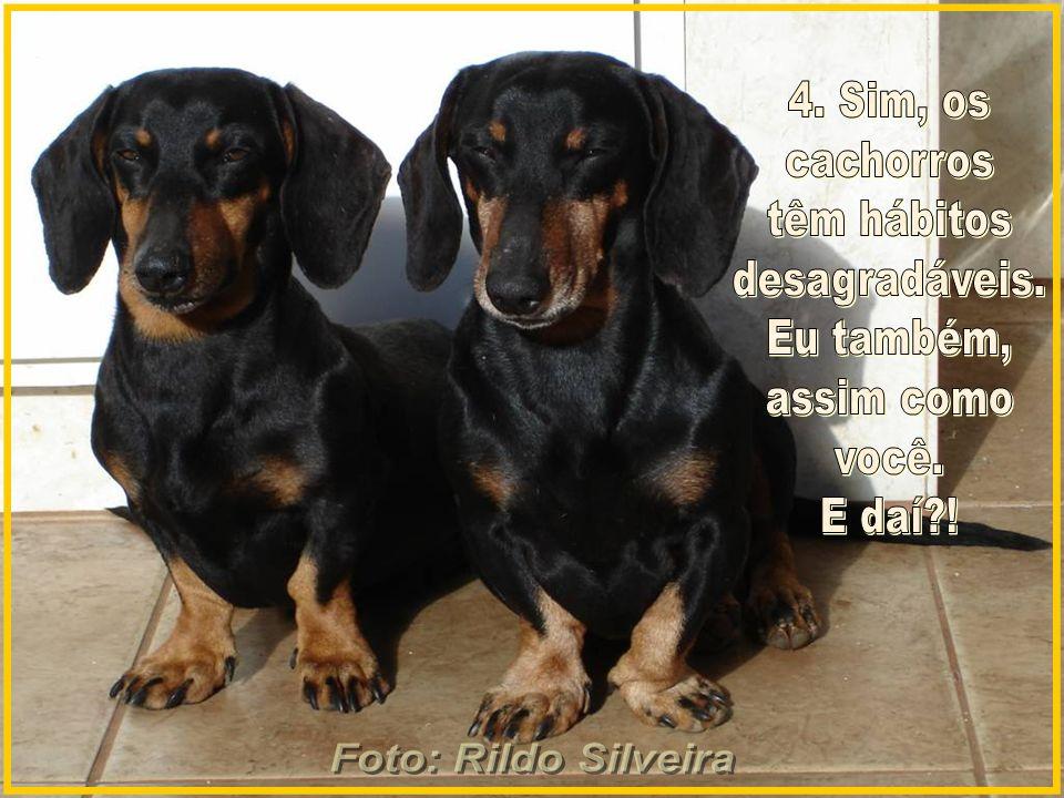 Foto: Rildo Silveira 4. Sim, os. cachorros. têm hábitos. desagradáveis. Eu também, assim como.