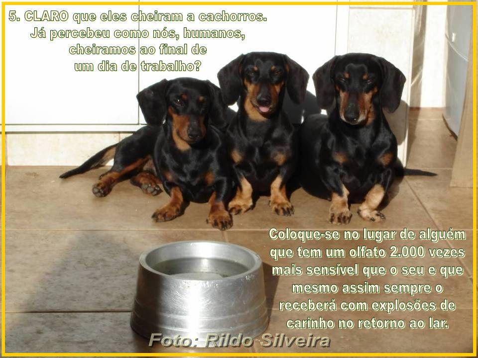 5. CLARO que eles cheiram a cachorros. Já percebeu como nós, humanos,