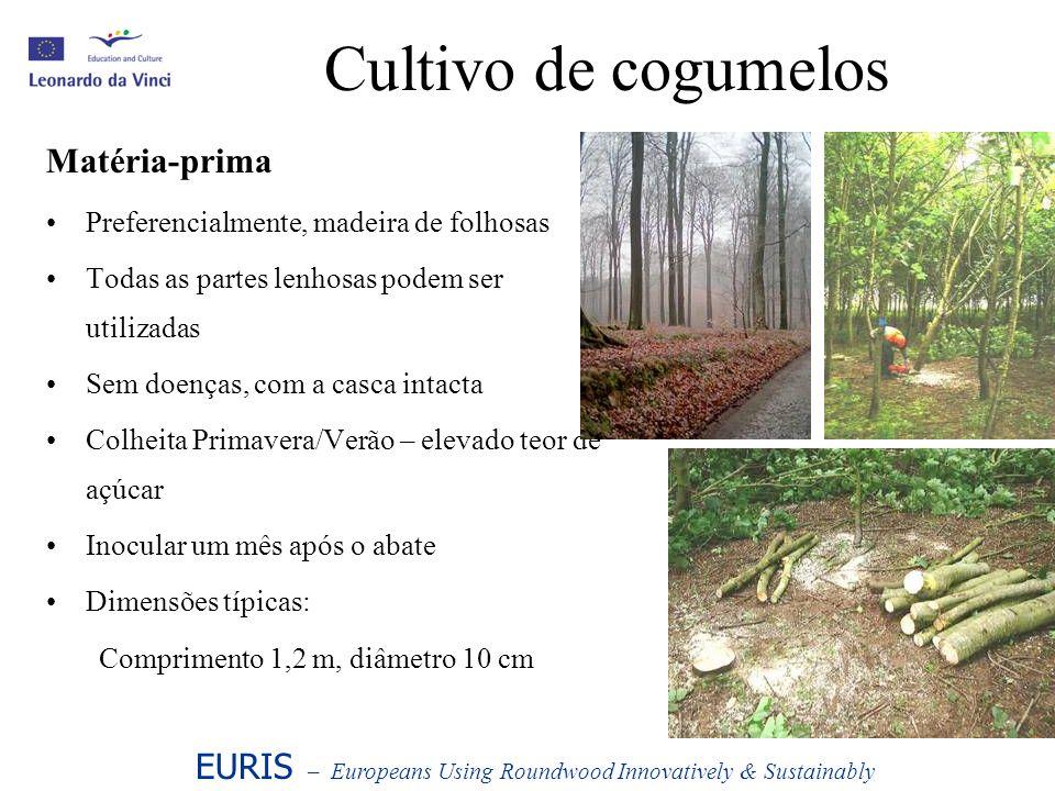 Cultivo de cogumelos Matéria-prima