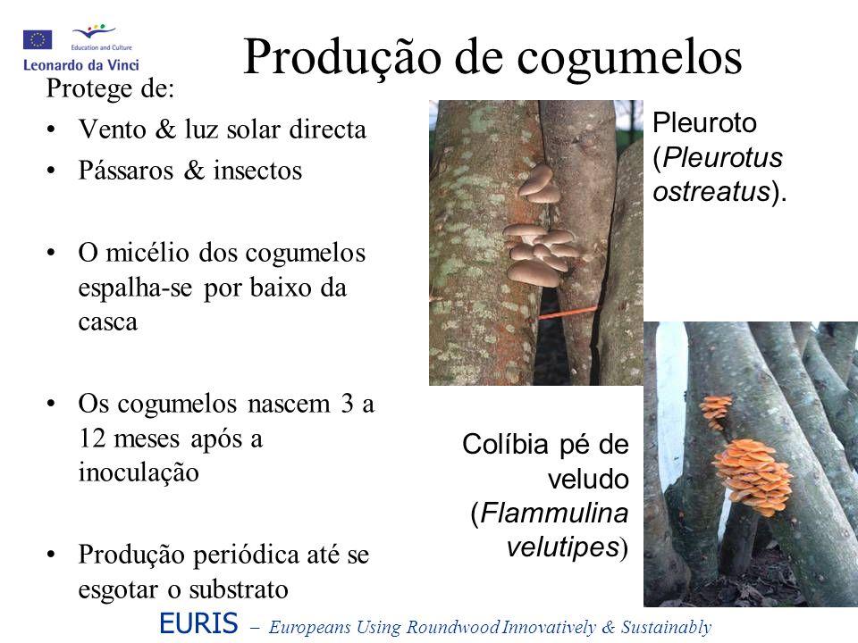 Produção de cogumelos Protege de: Vento & luz solar directa