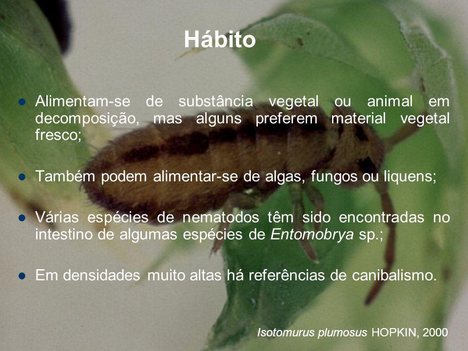 Hábito Alimentam-se de substância vegetal ou animal em decomposição, mas alguns preferem material vegetal fresco;