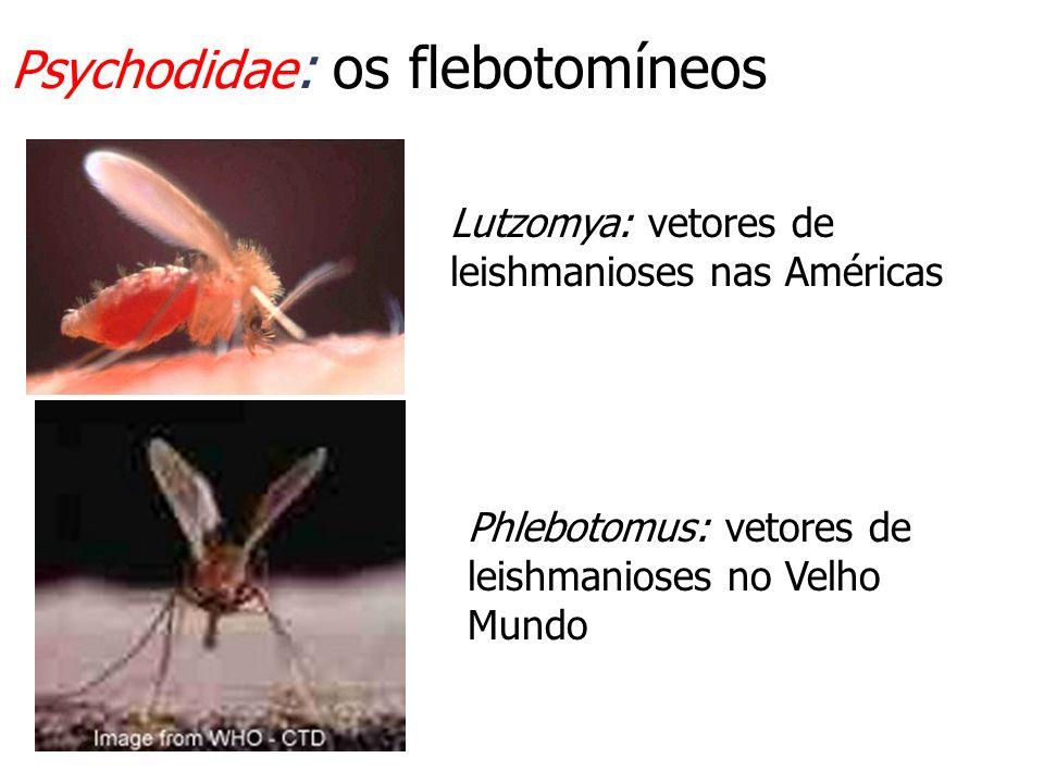 Psychodidae: os flebotomíneos