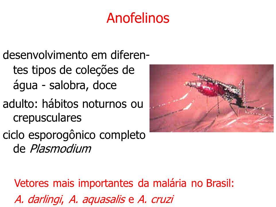 Anofelinos desenvolvimento em diferen- tes tipos de coleções de água - salobra, doce. adulto: hábitos noturnos ou crepusculares.