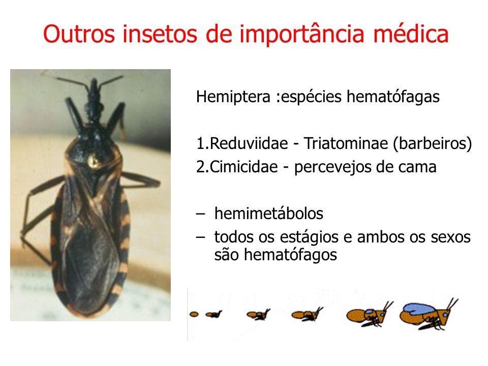 Outros insetos de importância médica