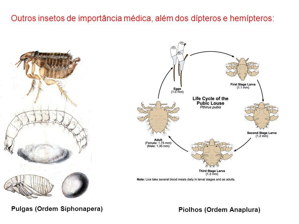 Outros insetos de importância médica, além dos dípteros e hemípteros: