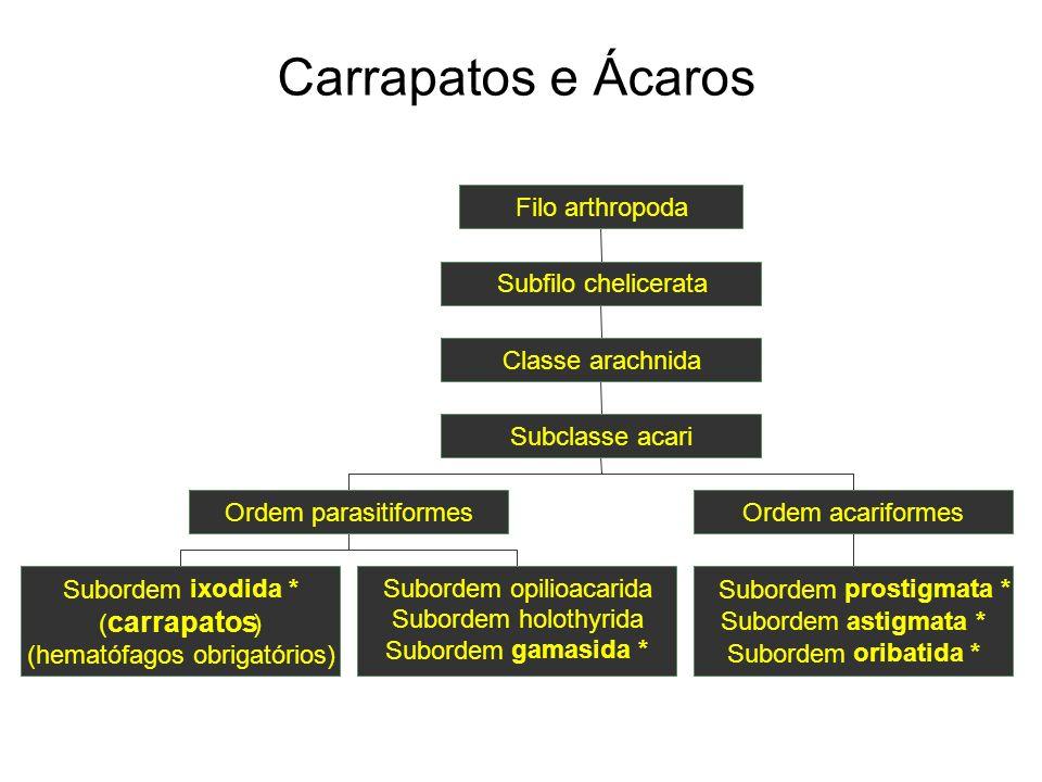 Carrapatos e Ácaros carrapatos Subordem ixodida * ( )