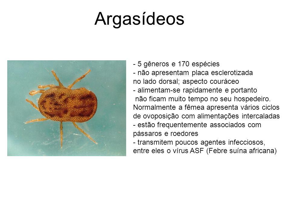 Argasídeos - 5 gêneros e 170 espécies