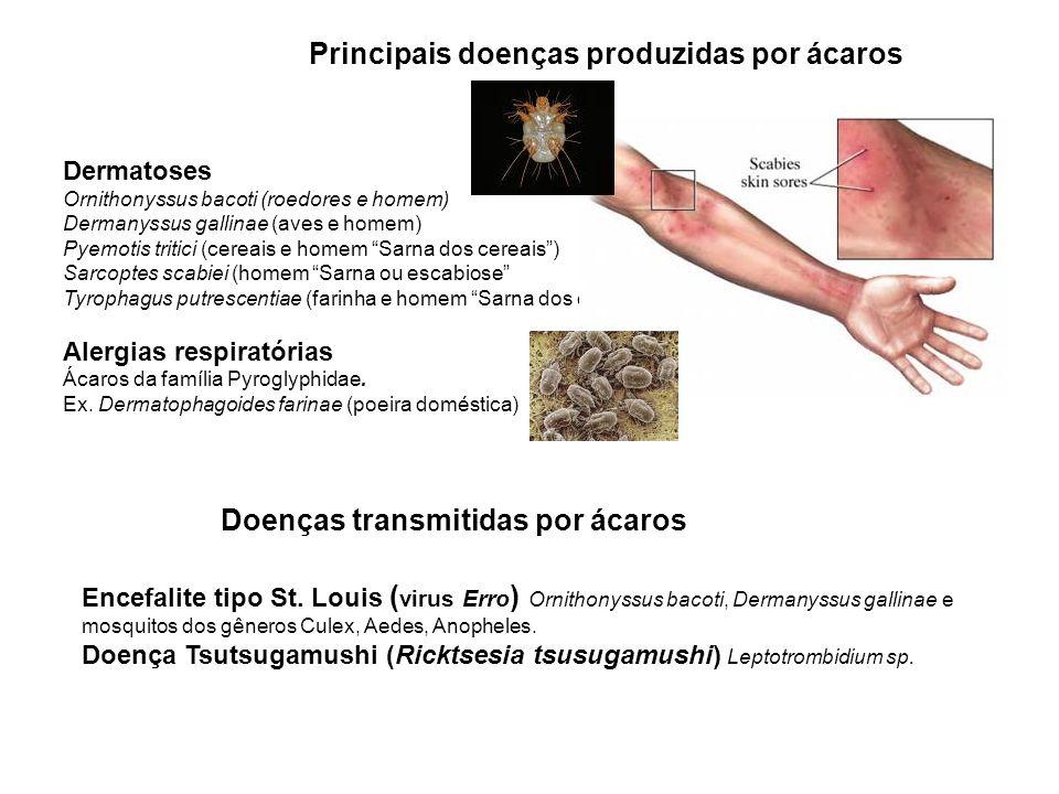 Principais doenças produzidas por ácaros