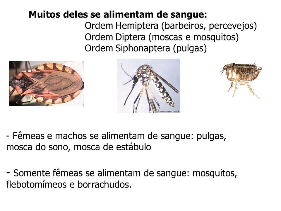 - Somente fêmeas se alimentam de sangue: mosquitos,