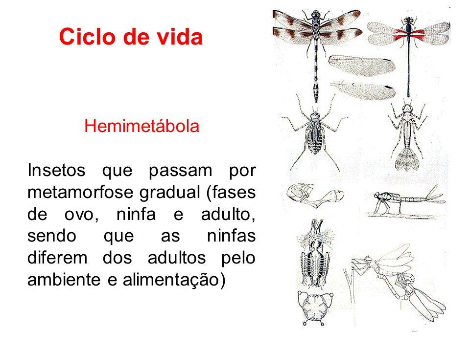 Ciclo de vida Hemimetábola