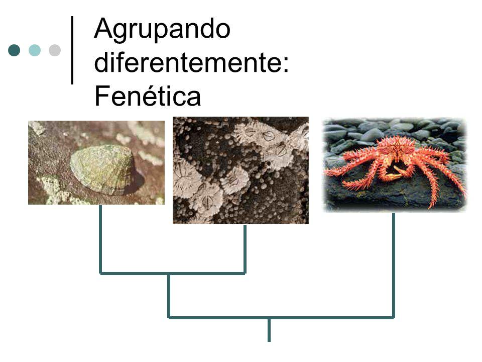 Agrupando diferentemente: Fenética