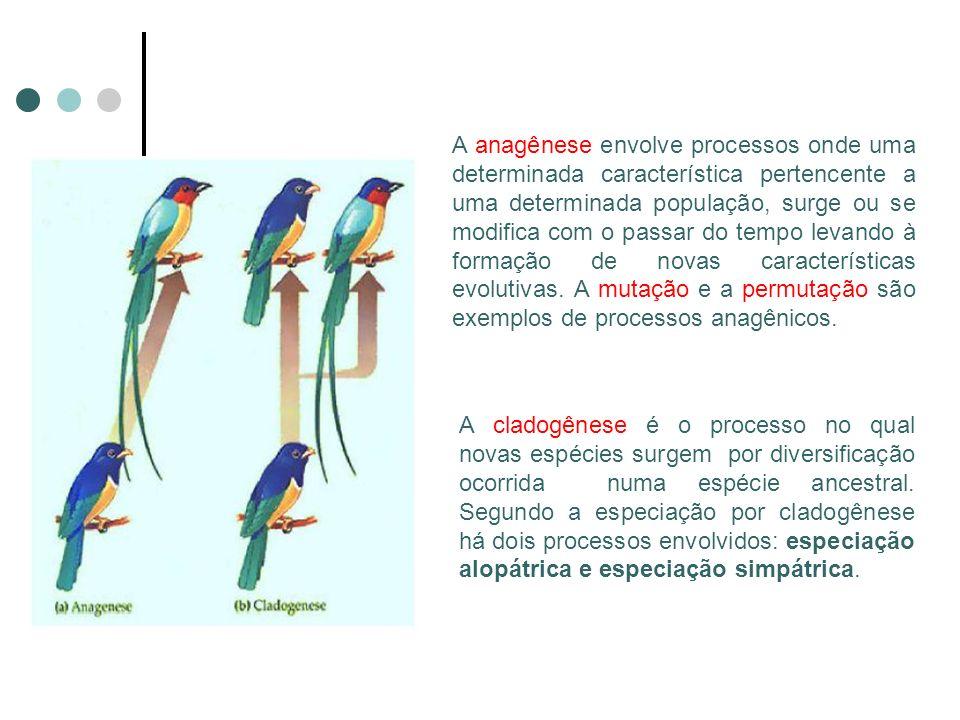 A anagênese envolve processos onde uma determinada característica pertencente a uma determinada população, surge ou se modifica com o passar do tempo levando à formação de novas características evolutivas. A mutação e a permutação são exemplos de processos anagênicos.