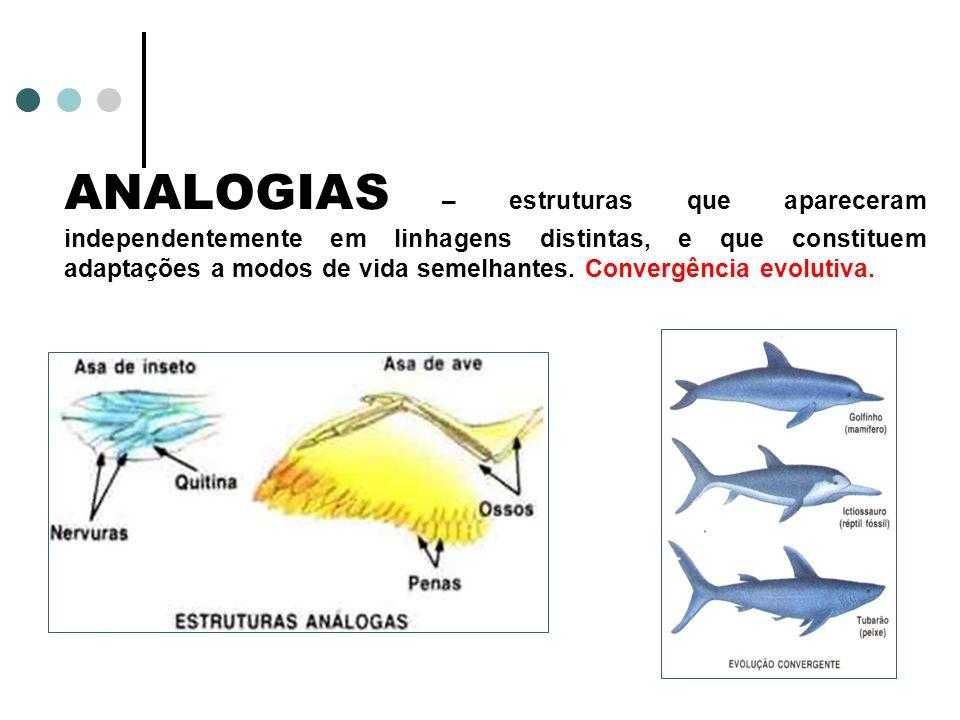 ANALOGIAS – estruturas que apareceram independentemente em linhagens distintas, e que constituem adaptações a modos de vida semelhantes.