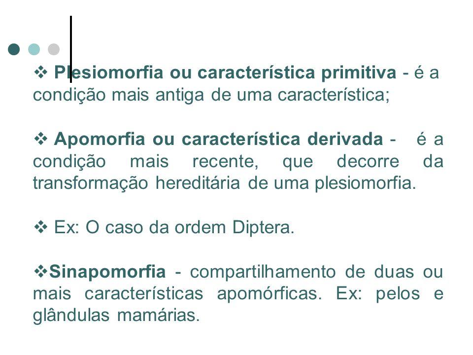 Plesiomorfia ou característica primitiva - é a condição mais antiga de uma característica;