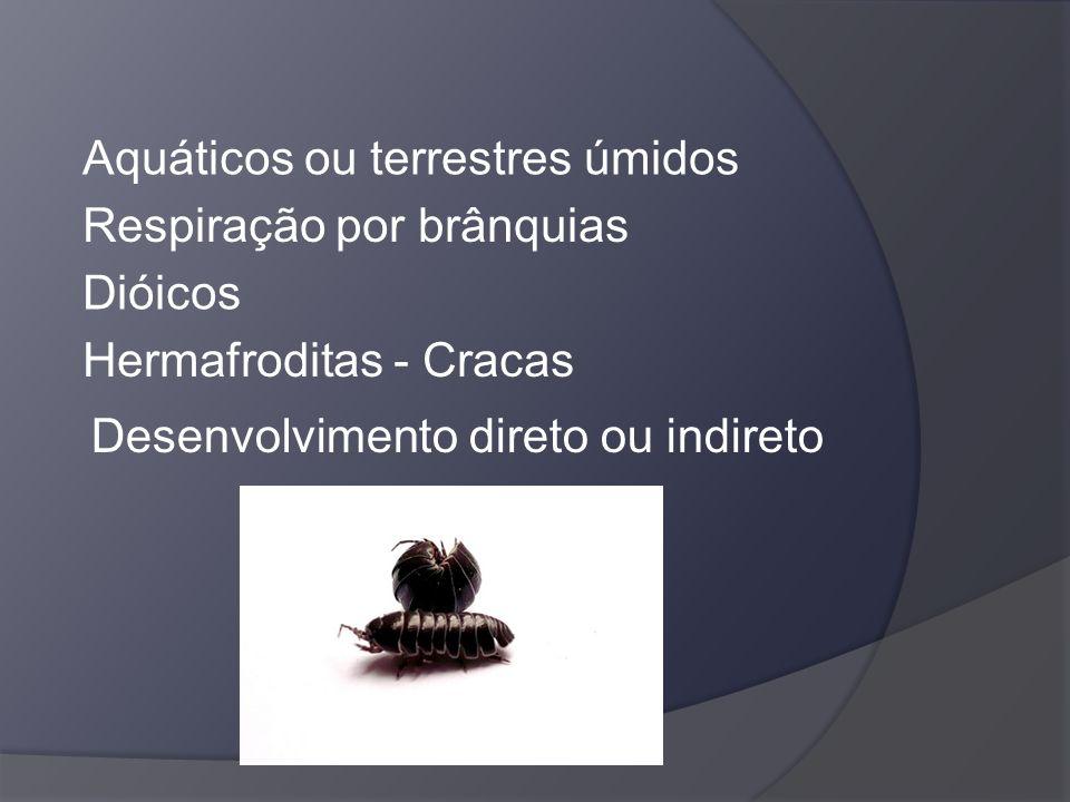 Aquáticos ou terrestres úmidos