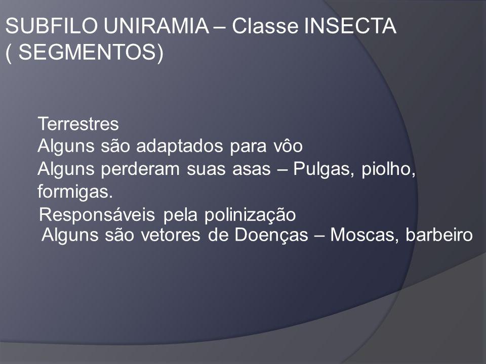 SUBFILO UNIRAMIA – Classe INSECTA ( SEGMENTOS)