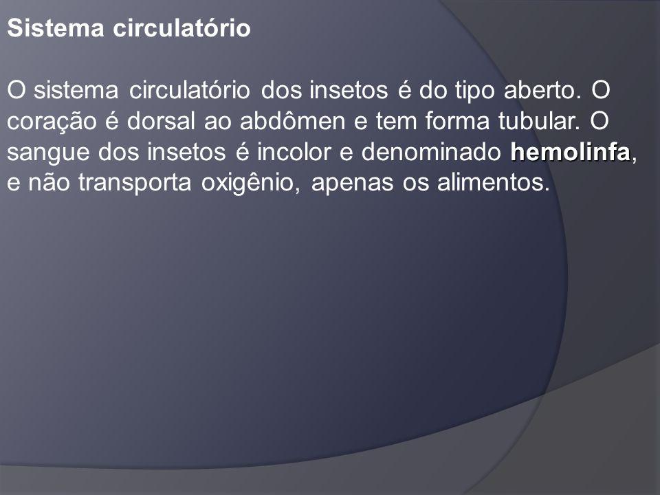Sistema circulatório O sistema circulatório dos insetos é do tipo aberto.