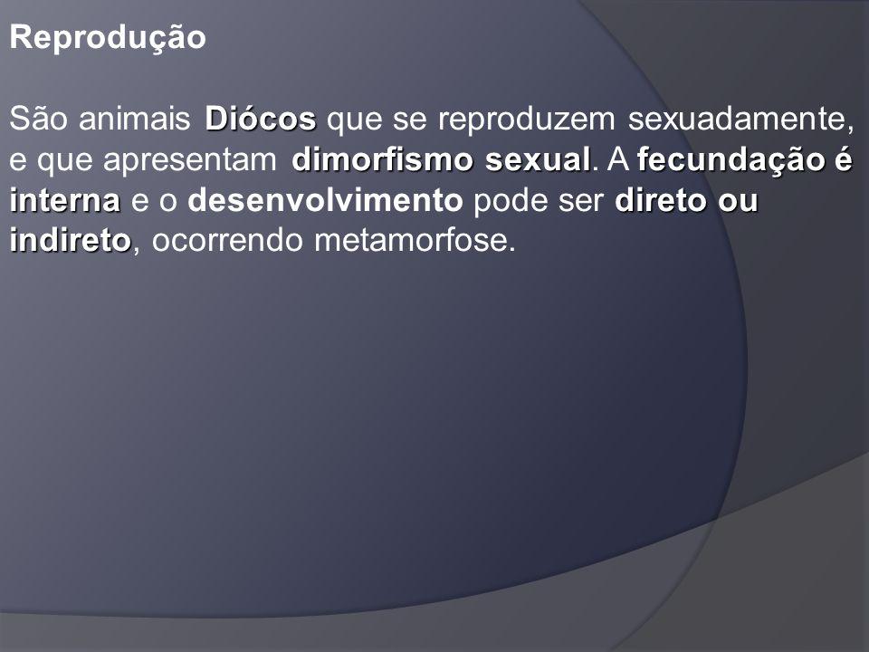 Reprodução São animais Diócos que se reproduzem sexuadamente, e que apresentam dimorfismo sexual.