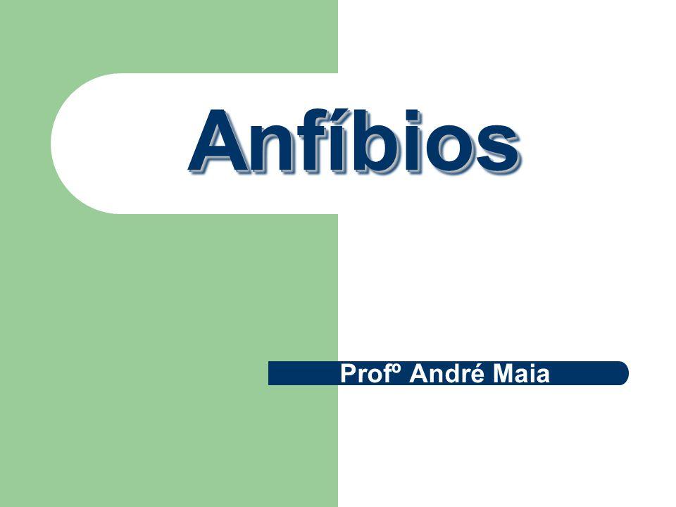 Anfíbios Profº André Maia