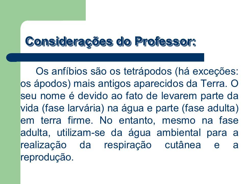 Considerações do Professor: