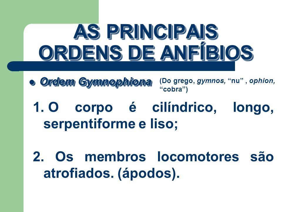 AS PRINCIPAIS ORDENS DE ANFÍBIOS