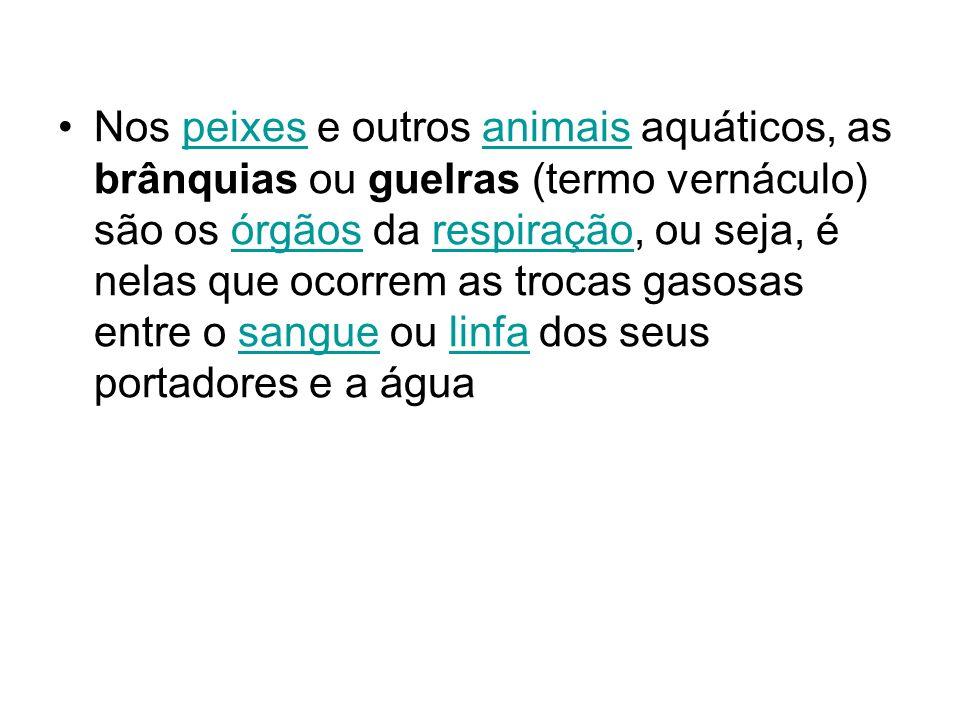 Nos peixes e outros animais aquáticos, as brânquias ou guelras (termo vernáculo) são os órgãos da respiração, ou seja, é nelas que ocorrem as trocas gasosas entre o sangue ou linfa dos seus portadores e a água