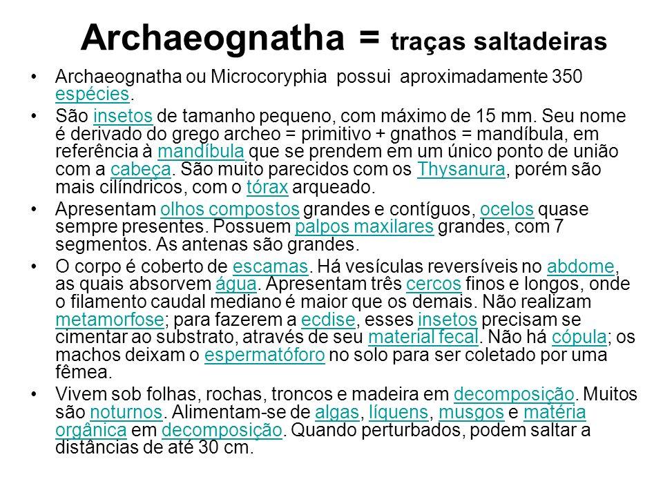 Archaeognatha = traças saltadeiras
