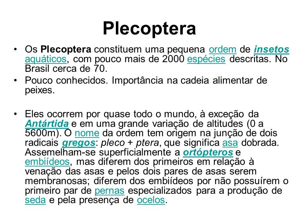 Plecoptera Os Plecoptera constituem uma pequena ordem de insetos aquáticos, com pouco mais de 2000 espécies descritas. No Brasil cerca de 70.