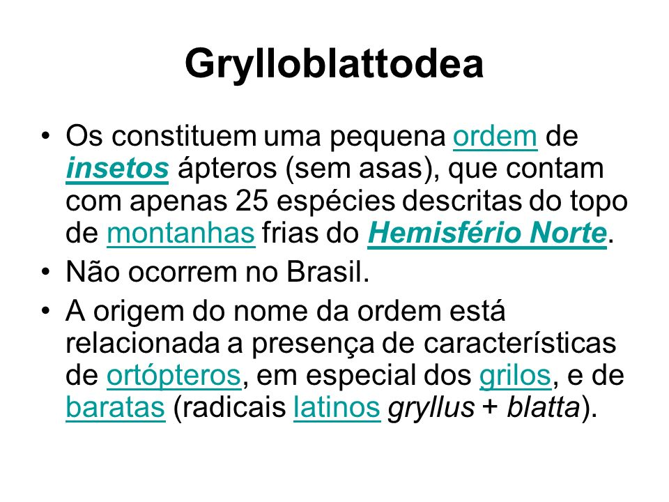 Grylloblattodea