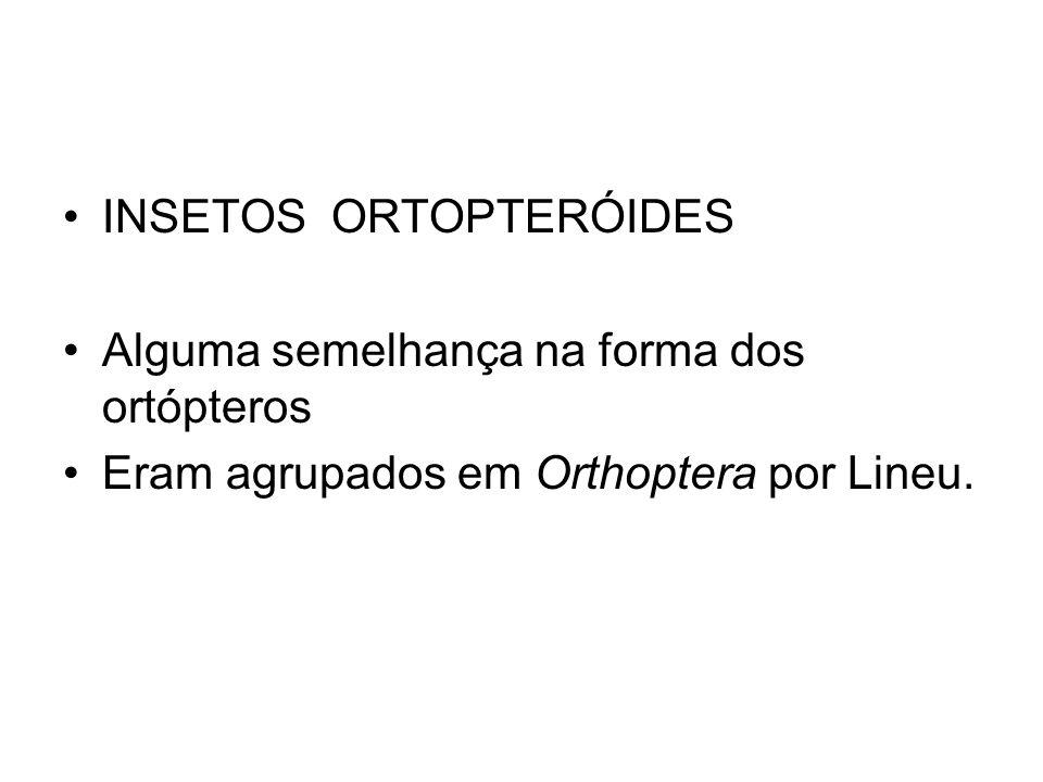 INSETOS ORTOPTERÓIDES