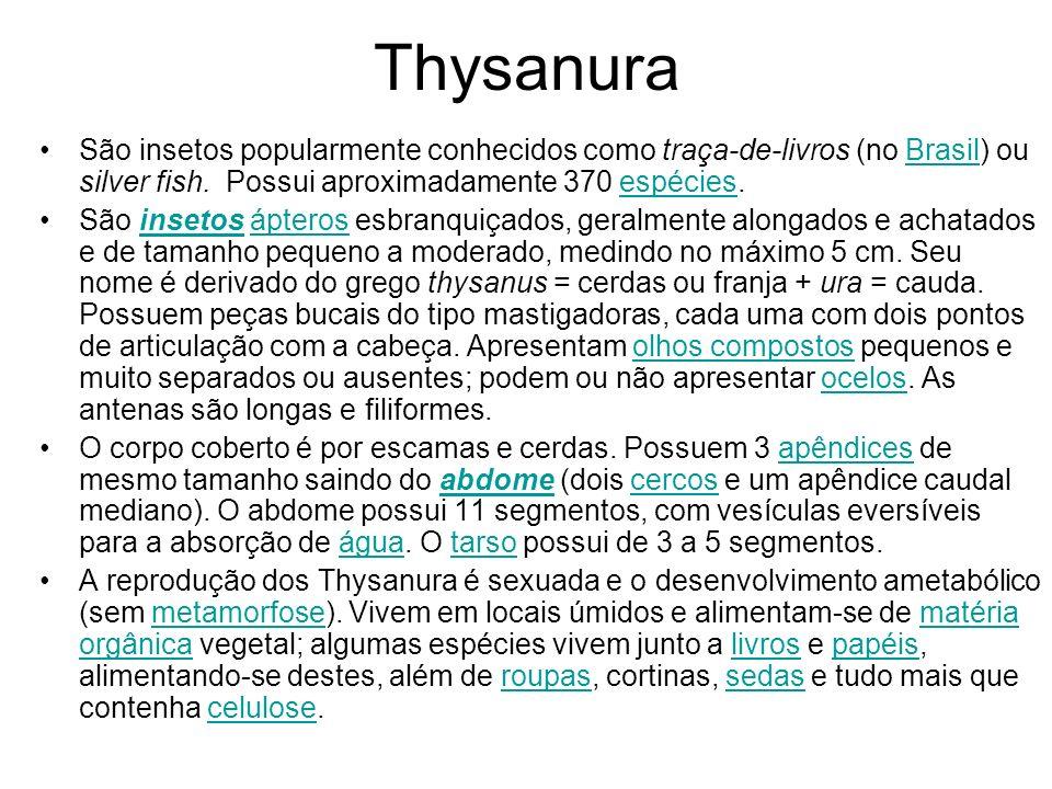 Thysanura São insetos popularmente conhecidos como traça-de-livros (no Brasil) ou silver fish. Possui aproximadamente 370 espécies.