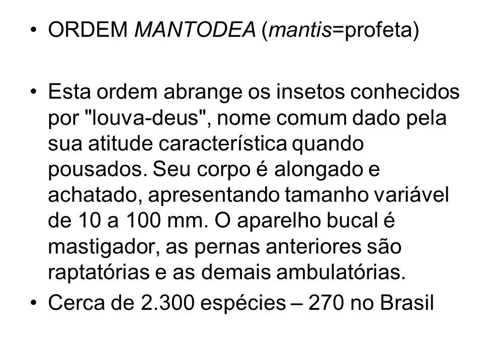 ORDEM MANTODEA (mantis=profeta)