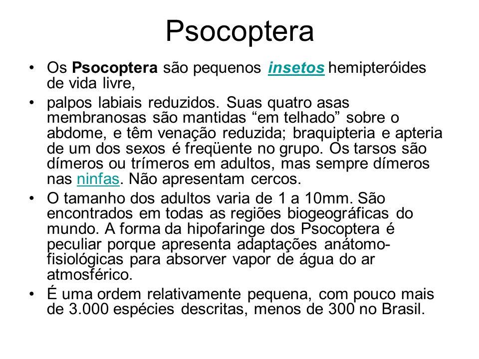 Psocoptera Os Psocoptera são pequenos insetos hemipteróides de vida livre,
